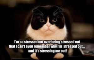 Stress1